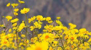 Image result for flower bloom