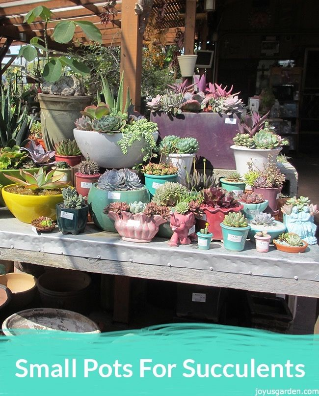 Succulents Are Well Suited For Planting In Smaller Pots. Hereu0027s A Roundup  Of Small Pots
