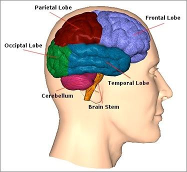 Brain damage critical thinking