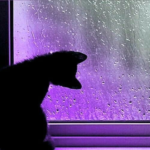Cats and purple..two of my favourite things