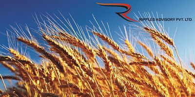 Intraday News Updates: India`s Wheat Imports Rise Above 5 Million Tonne, ...