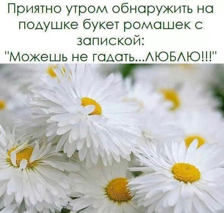 цветы картинки с цитатами представляют