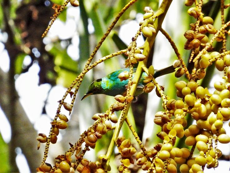 Can you name this bird spotted at our hub in Jalova, Costa Rica?