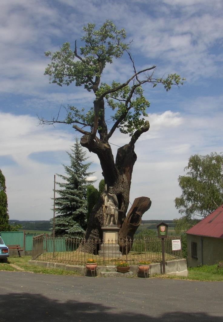 Svatováclavský dub - V místě současného Stochova stávalo před tisíci lety hradiště českých knížat. Stochovský hrad uvádí již Hájkova kronika v roce 870. Podle pověsti kněžna svatá Ludmila roku 903, když se narodil její prvorozený vnuk Václav, vysadila dub v rohu hradního nádvoří. Byla sice křesťankou, ale ctila i staré tradice, ke kterým vysazování stromu na počest narození dítěte patřilo. Podle Václava Hájka z Libočan byla obec Stochov pojmenována podle sta chův, které se o Václava staraly.