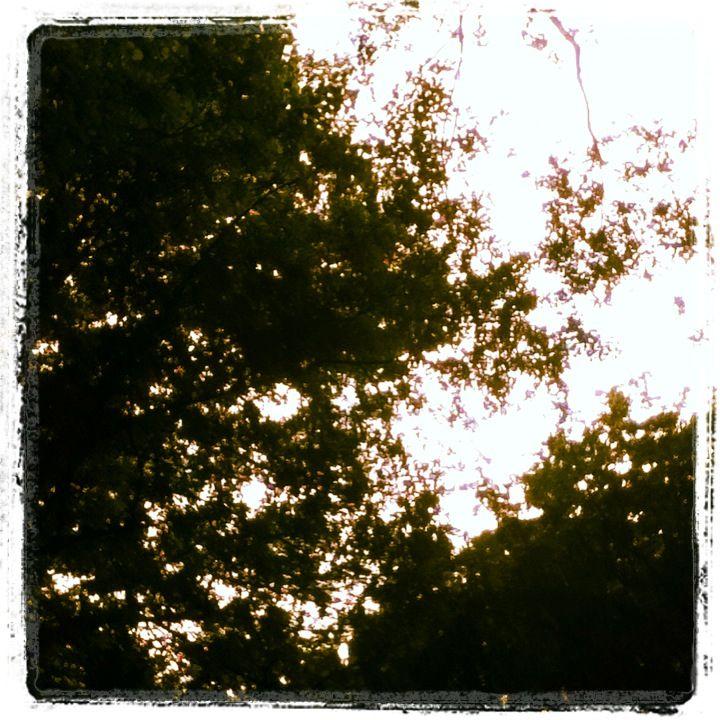 Trees :P