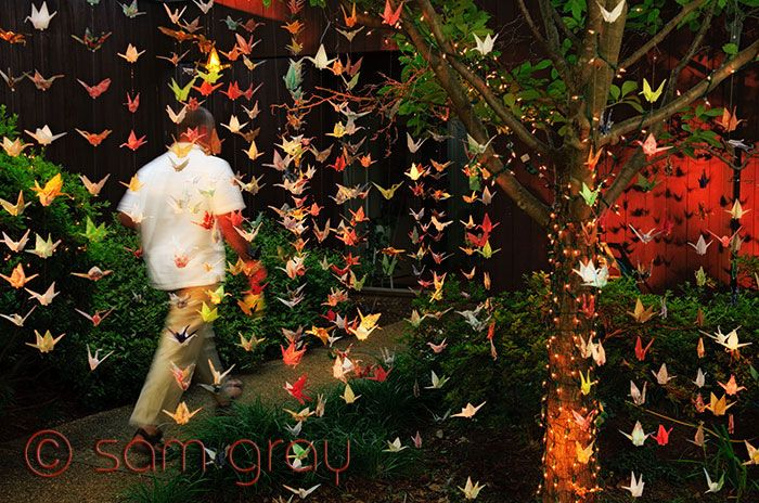 1000 paper cranes for her wedding!