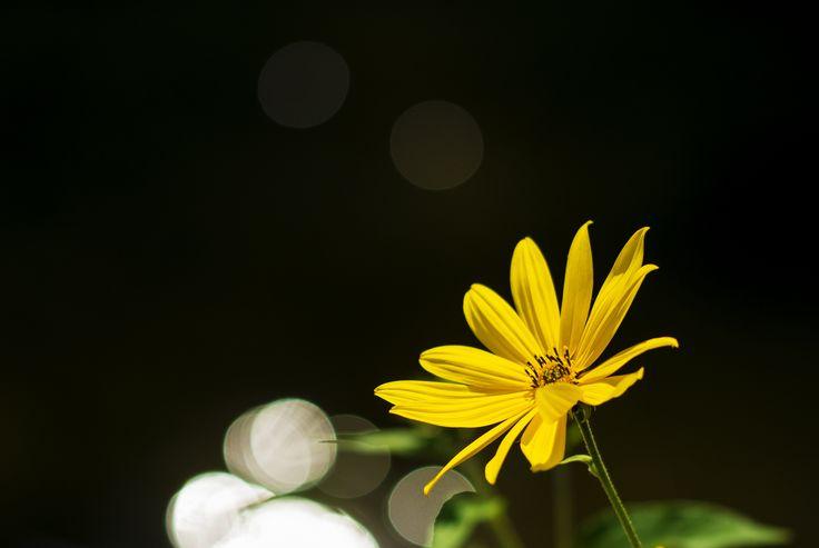 Yellow whit bokeh by Nicola Di Nola on 500px