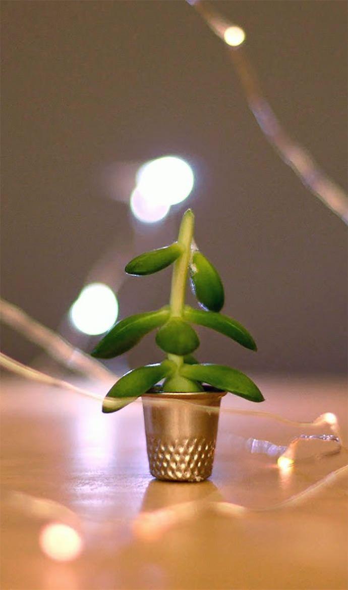Weihnachtsbaum Explodiert.Der Kleinste Weihnachtsbaum Der Welt Kleinste Weihnachtsbaum Sie