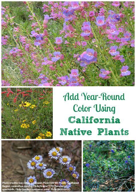 25 Beautiful Native Plants Ideas On Pinterest Native