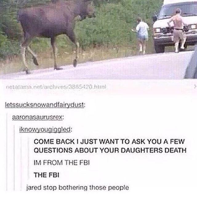 Ahh, Sam. Just a big ol' moose.                                                                                                                                                                                 More