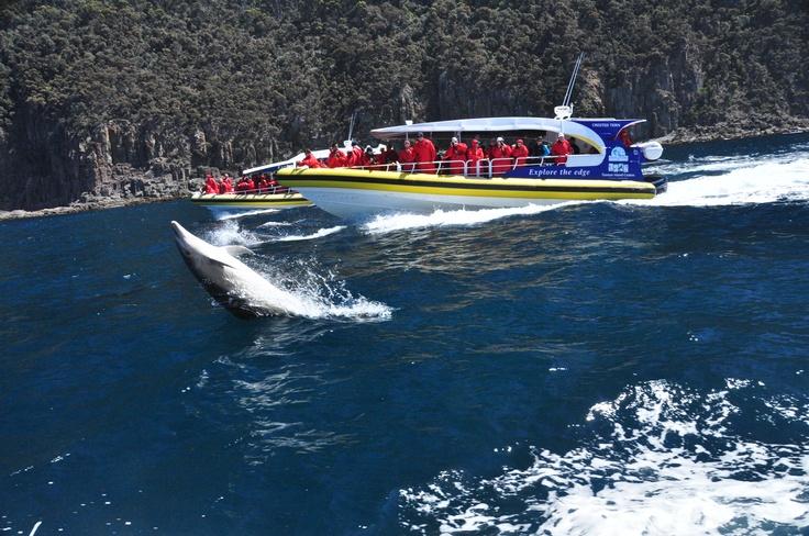Dolphins, Bruny Island