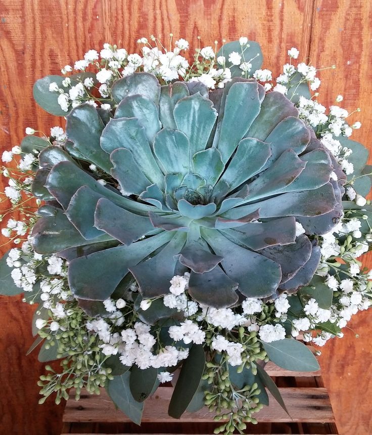 Bridal bouquet with one large succulent, seeded eucalyptus and babies breath