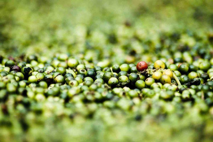 De bekende culinair journalist Onno Kleyn schrijft acht originele recepten voor Hortus botanicus Leiden. In elk recept staat één specerij centraal. Vanaf de eerste openingsdag in 2017 krijgen Hortus-bezoekers kostelooshet boekje met acht specerijenrecepten mee. De recepten zijn aangevuld met achtergrondinformatie over de planten en met pentekeningen van Esmée Winkel.  Deze geste aan de bezoekers