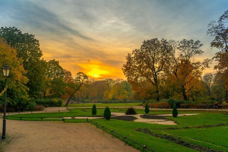 Autumn - Taken in the Park during Autumn sunset.