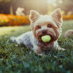 How do I prevent calcified discs in dogs? #Pets #PetLife #SouthAfrica