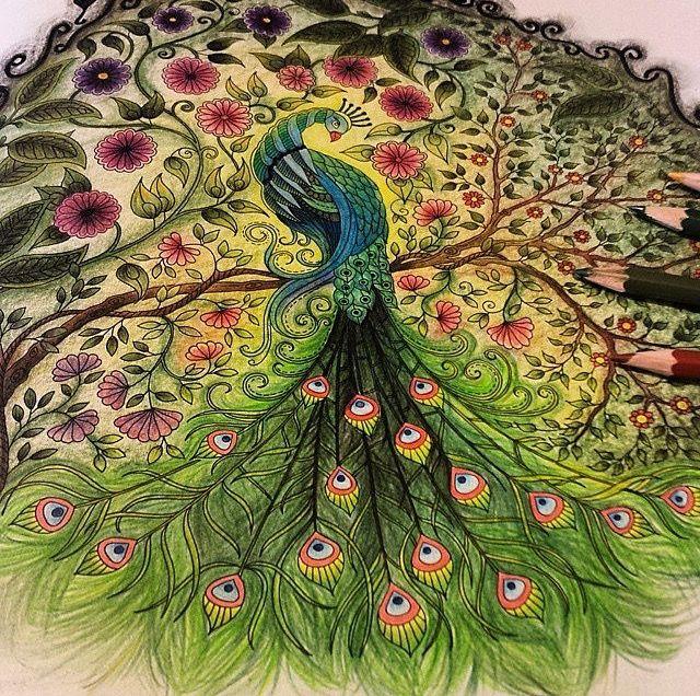 Peacock Adult ColoringColoring BooksJohanna BasfordSecret GardensPeacocksJoanna