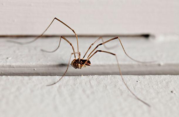 Mindössze 350 forint! A leghatásosabb házi szer pókok ellen | femina.hu