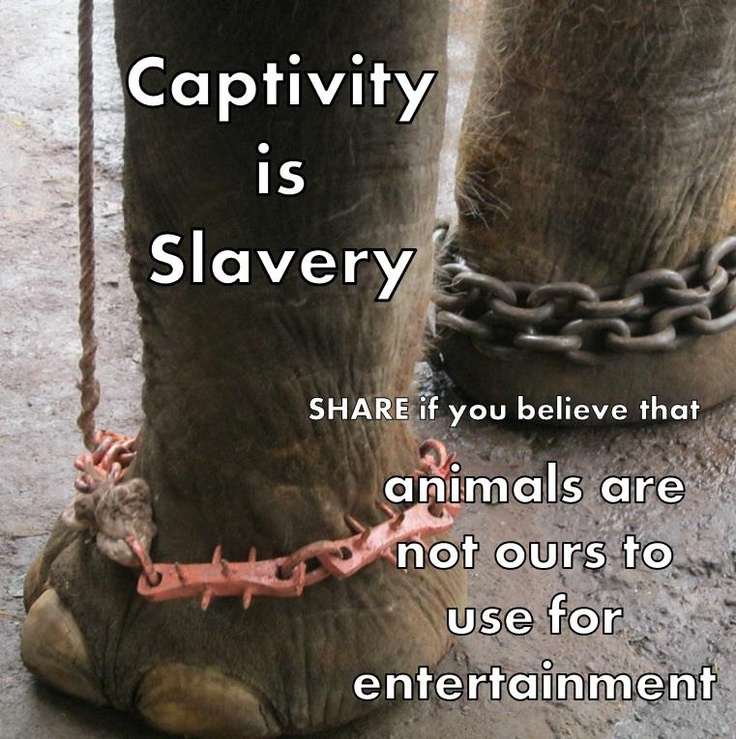 SPEAK OUT!  Help Ban the Use of Wild Animals in USA Circuses!      Countries like Great Britain have realized that making wild animals perform tricks in circuses is wrong. Now it's time the U.S. follows suit!  PLZ Sign & Share!    http://www.thepetitionsite.com/971/361/878/ban-the-use-of-wild-animals-in-us-circuses/?z00m=20565573