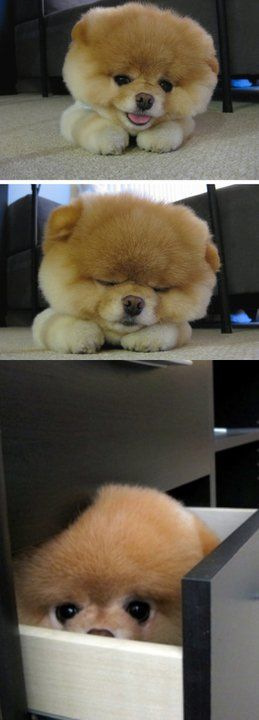the cutest dog ever!!!:) Ғσℓℓσω ғσя мσяɛ ɢяɛαт ριиƨ>>>> Ғσℓℓσω: нттρ://ωωω.ριитɛяɛƨт.cσм/мαяιαннαммσи∂/