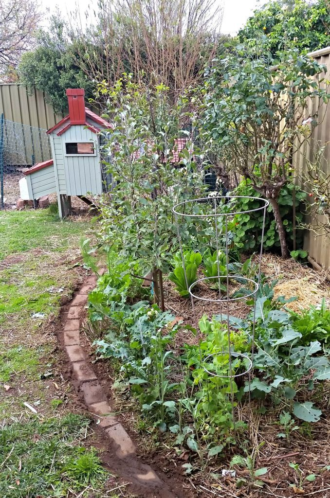 Brighten your winter food garden with foliage - Rosehips and Rhubarb