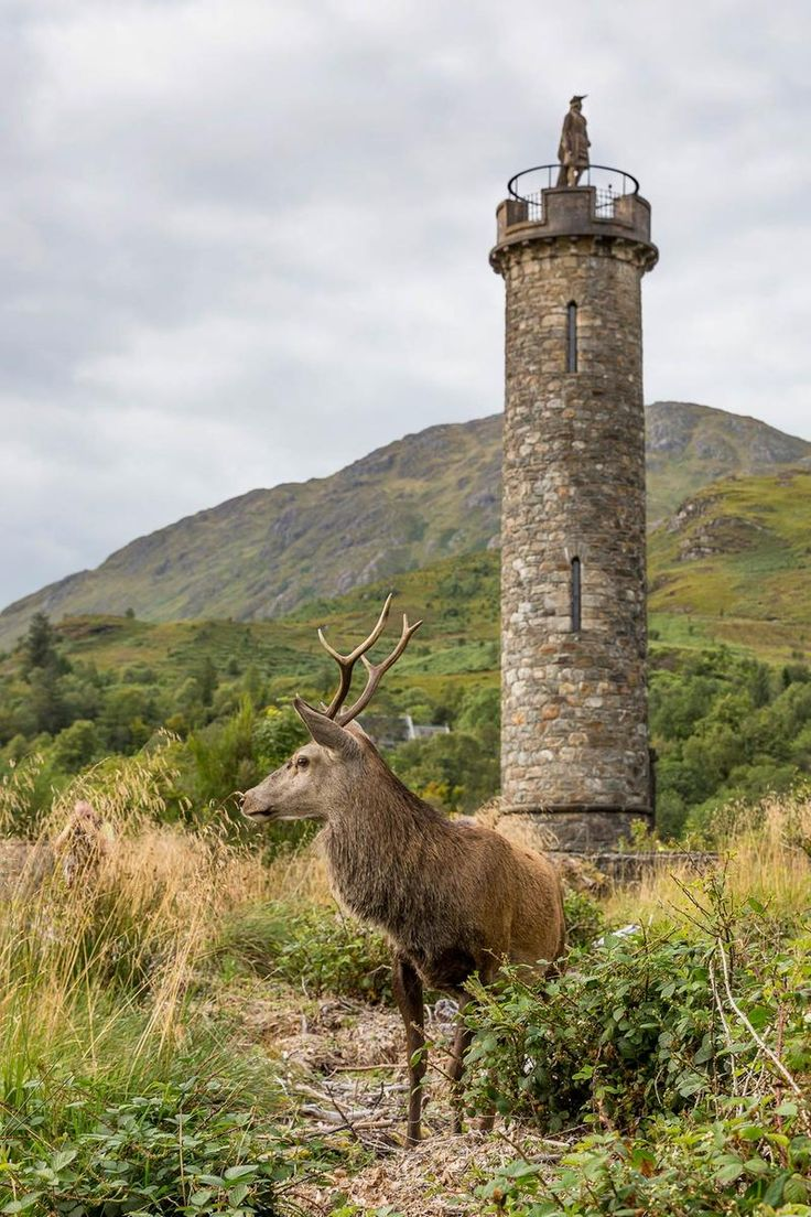 This monument marks the spot where Bonnie Prince Charlie raised his standard in 1745 known as the Jacobite Rising. Set amidst superb Highland scenery at the head of Loch Shiel, Near Fort William. The Glenfinnan Monument is a tribute to the clansmen who fought and died for the cause of Prince Charles Edward Stuart.