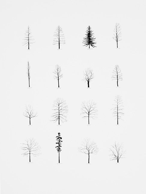 Gorgeous trees, which would be more gorgeous if they were #generative. :P