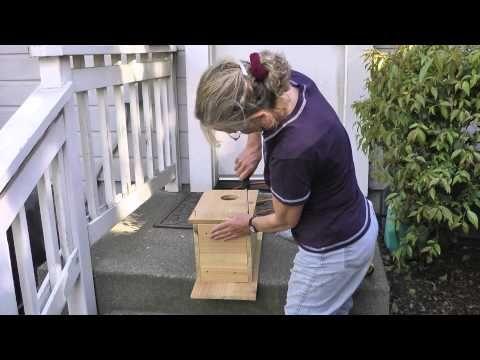 Kestrel Nest Box - YouTube