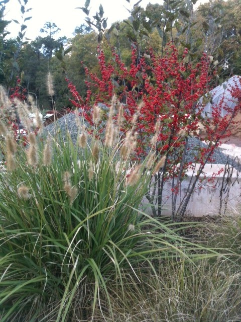 698 best images about plant combinations on pinterest for Planting schemes with grasses