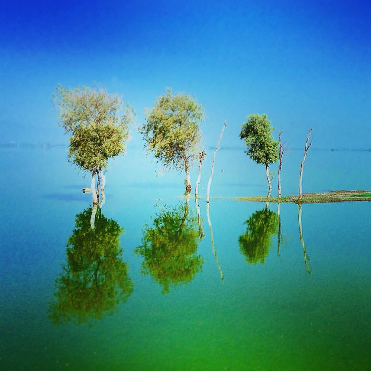 Trees, water and sky at lagoon in Mexico