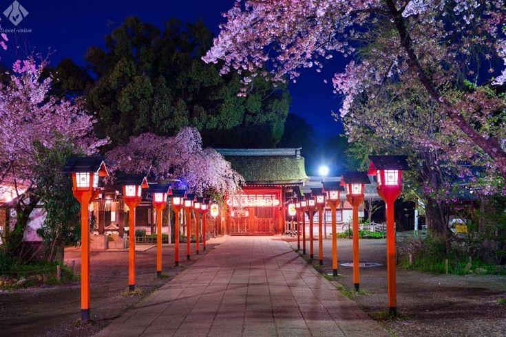 平野神社 ライトアップ