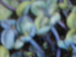 A close up of the hydrangea from my garden. There is something impressionistic about the quality of the image.