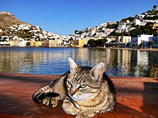 Cat in Leros island...