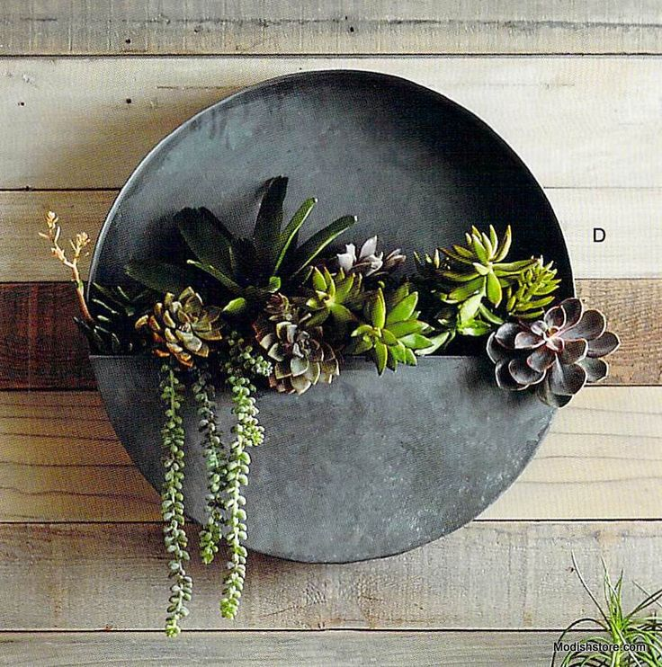 Playfully shaped planters and vases are crafted from galvanized iron with an aged zinc finish. Full and half-circle planters are the perfect receptacles for water-wise succulent gardening. These plant