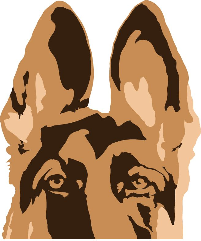 1O Myths About Adopting A German Shepherd