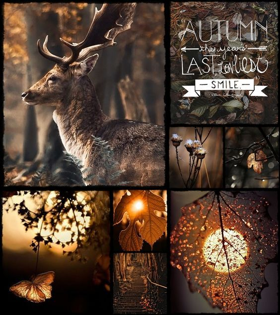 Mood board autumn inspiration collage