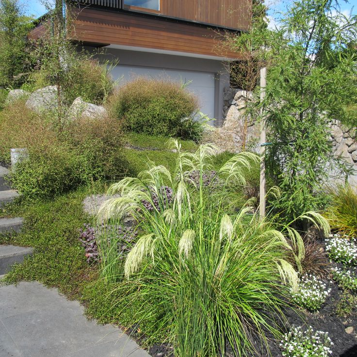 Native planting Prospect Tce Xanthe White