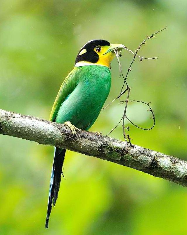 181 Best Beautiful Birds Images On Pinterest