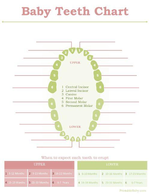 Printable Baby Teeth Chart -- wish I'd had this earlier!!