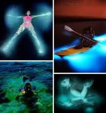 Swimming in the Bioluminescent Bay ~ Fajardo, Puerto Rico