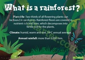 What is a Rainforest? Poster