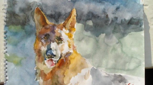 Cristina Grinciuc Watercolor GSD.
