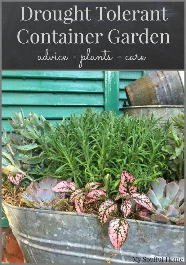 Drought Tolerant Container Garden Gardens Home And 400 x 300