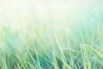 grass and natural green pastel background