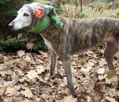 17 Best images about Greyhounds on Pinterest Brooches ...
