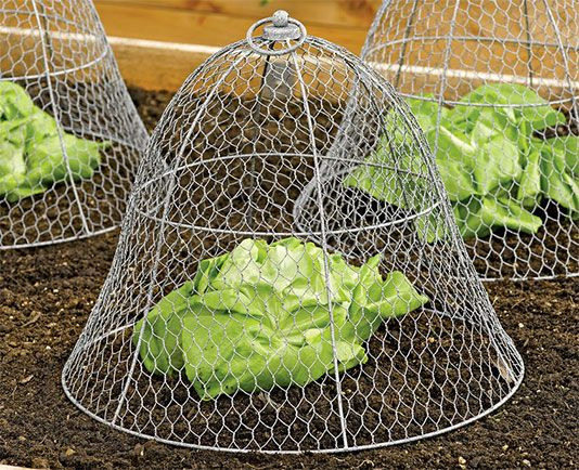 17 best ideas about garden cloche on pinterest may 24 - How to keep animals out of your garden ...