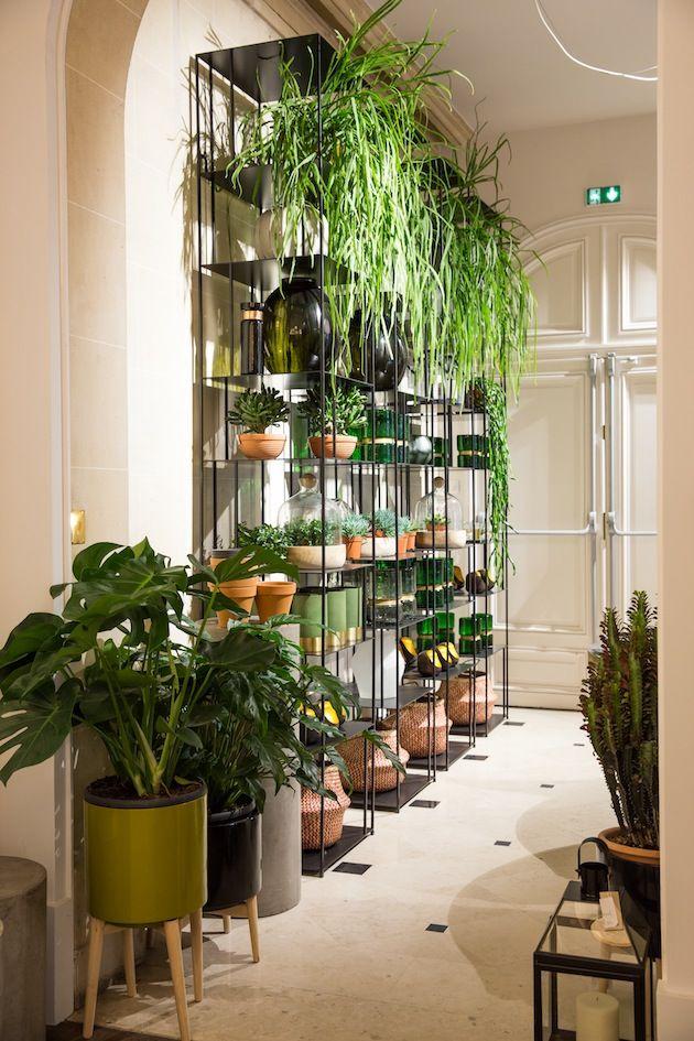 Les plantes viennent habiller une bibliothèque en fer, tel un mur végétal.