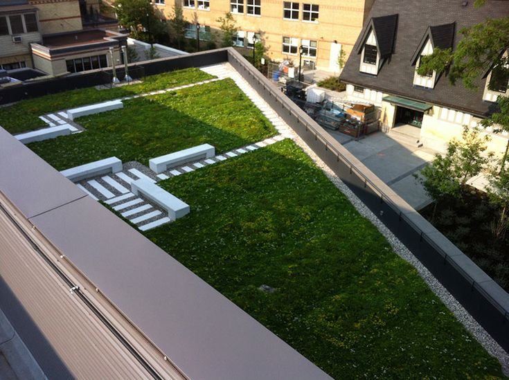 Athletics and Wellness Centre – Branksome Hall - Ginkgo Sustainability | Living Roofs & Walls