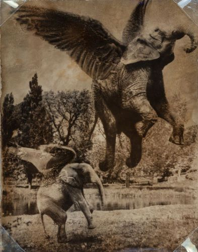 "Joan Fontcuberta (Spanish, b. 1955) and Pere Formiguera (Spanish, 1952-2013) Aerofants, from the Fauna series, 1987 Gelatin silver 5-1/4 x 4-1/8 inches (13.3 x 10.4 cm) Edition of 5 Copyright in pencil on overmat; inscribed 'Fauna is a project by Joan Fontcuberta & Pere Formiguera/1987' in pencil on mount recto; dated with written letter by the ""photographer"" Charles A. Bromley dated 1941 in red pencil on verso."