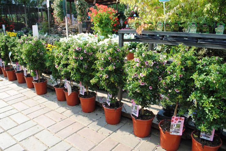 Уличные растения