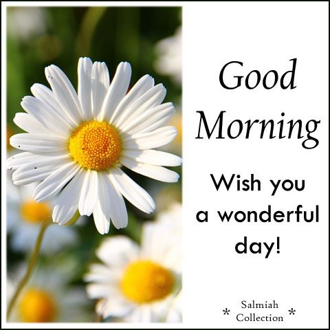 Salmiah Collection: Good Morning Wish 22: Wish you a wonderful day!